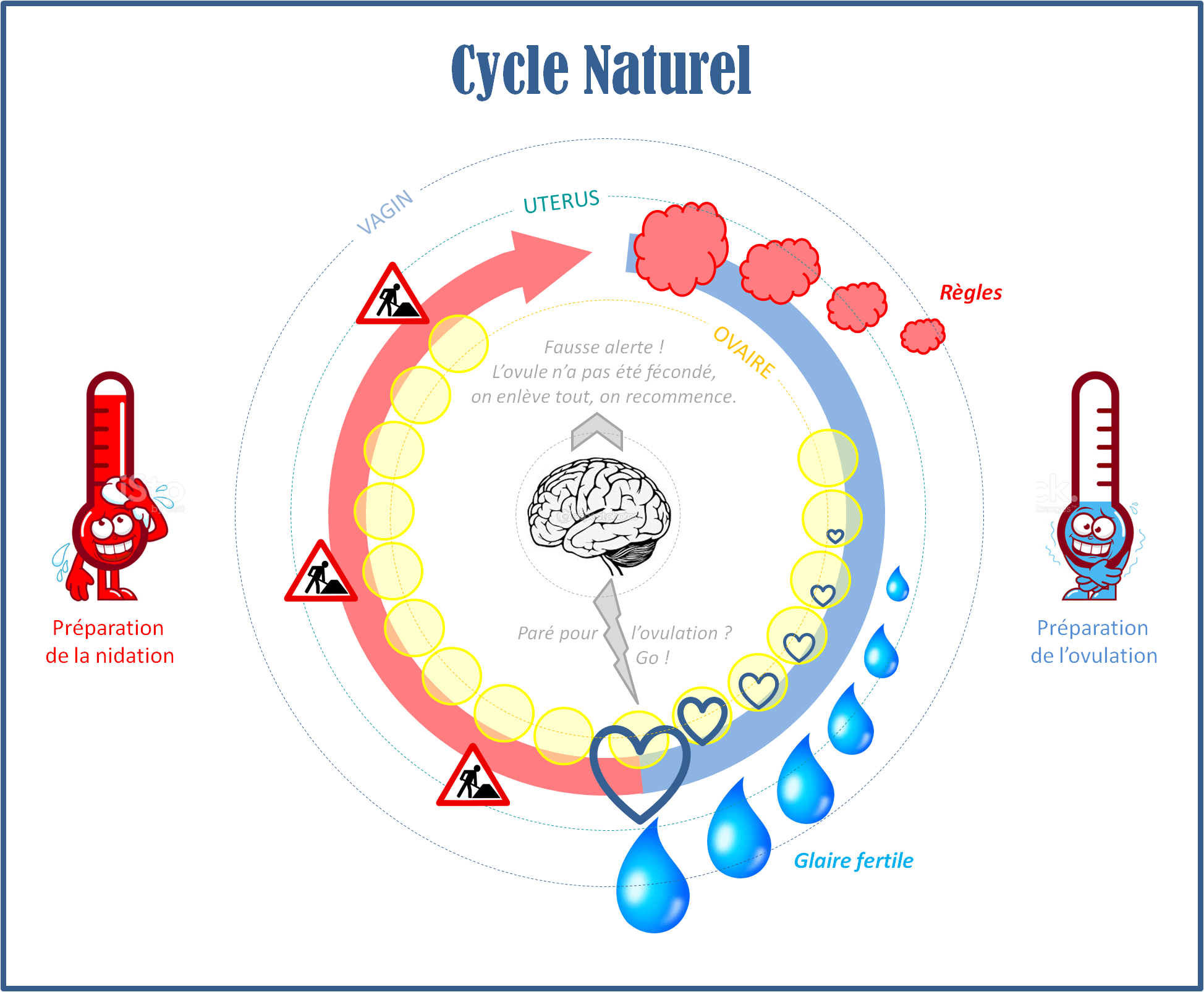 cycle naturel